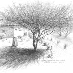 Desert Casita & Palo Verde Tree - Mark Tucci Original Pen & Ink Sketch